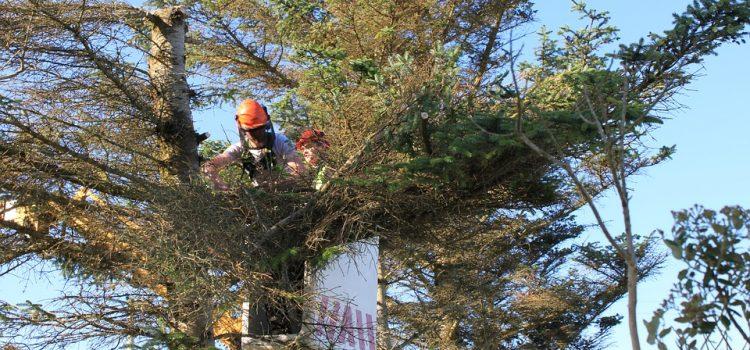 Potatura alberi alto fusto: scegli una ditta esperta