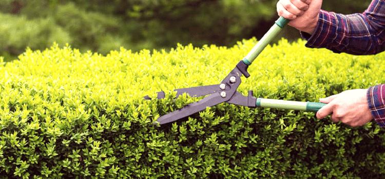 Manutenzione siepe giardino: come fare?