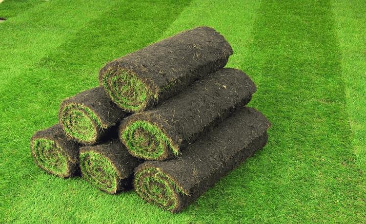 Rotolo di erba vera: installa un prato pronto