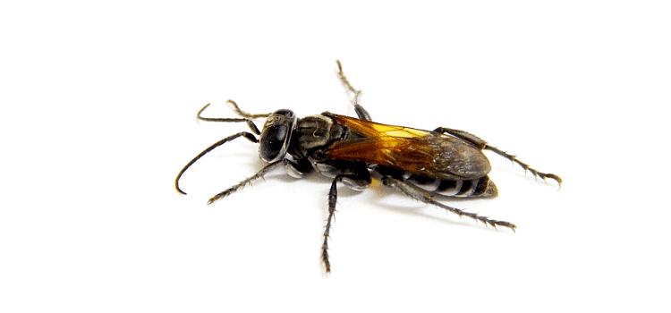 Come eliminare le vespe: contatta i professionisti